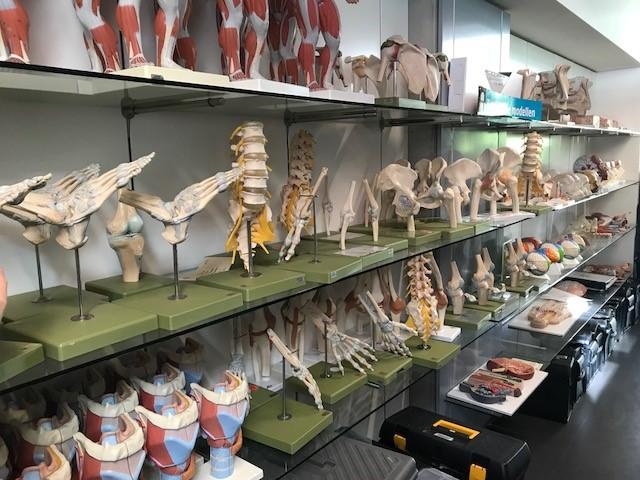 Anatomiamalleja kampus Kantienbergin kirjastossa