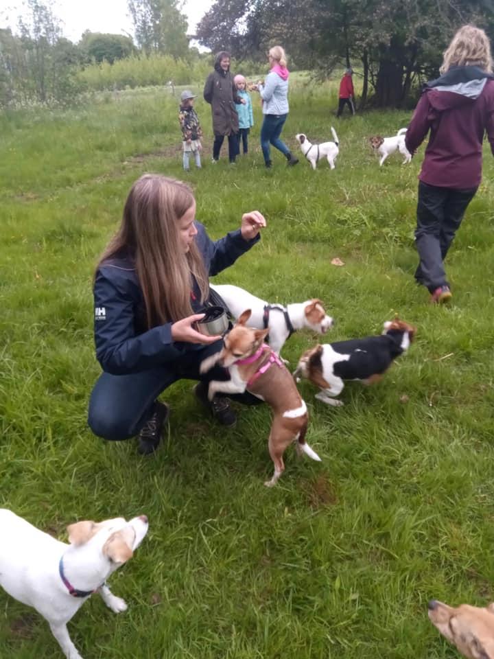 Päätoimittaja pienten koirien ympröimänä